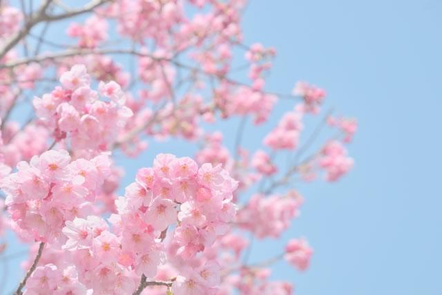 アトピー性皮膚炎【春の対策】